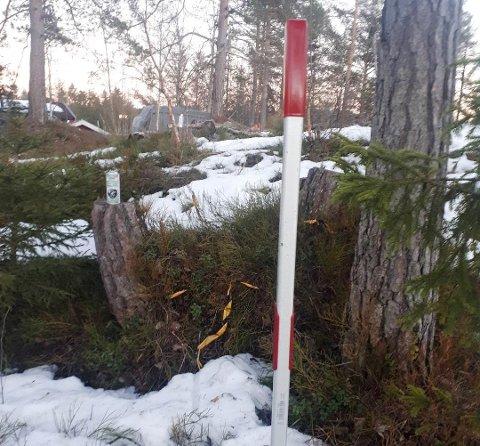 FELTE NABOENS TRÆR: Sprayboksene er satt på stubbene etter trærne som ble felt. Måkespaden markerer nabogrensen.
