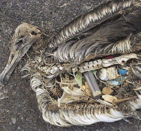 Plast: Dette fant de i fuglen.
