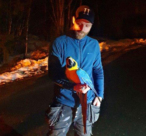 NEDE IGJEN: Papegøyen Pia fikk hjelp av brannvesenet til å komme seg ned fra treet, noe eieren Torstein Rønningen. var svært glad for.