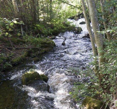 KJENTMANN: – Det burde vært mye mer vann i disse elvene og bekkene nå, sier Frank Olav Kristensen.