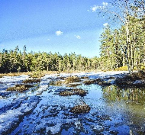 Vårtur: Bildet er tatt på Gamlegrendåsen litt tidligere i vår. Nå er all snøen borte og det er tørst og fint på runden.