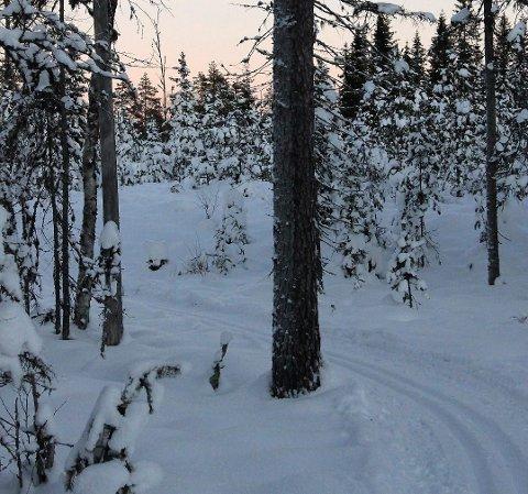 KJØRT OPP: De første skisporene i distriktet er kjørt opp. Nå kan ivrige skigåere ta seg en tur på Speismark.