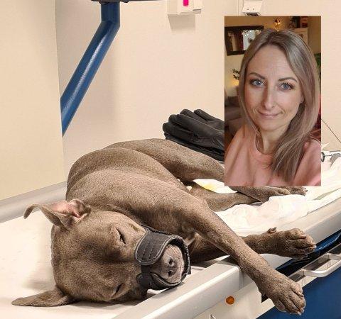 GRUSOM OPPLEVELSE: Trude beskriver hendelsen som forferdelig og håper de snart får svar på hva som skjedde da hunden hennes plutselig ble lam i bakbena.