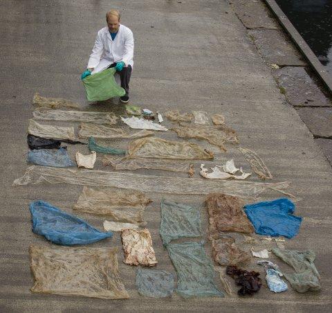 Gåsnebbhvalen som strandet på Sotra hadde flere plastposer i magen.