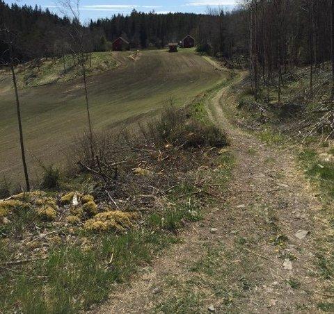 Sti: Stien inn til Frønesjøen skal oppgraderes slik at også rullestolbrukere kan ta området i bruk. I bakgrunn ser man hytta på Frøne som DNT nå leier av kommunen. Foto: Ingunn Melleby Fremmerlid