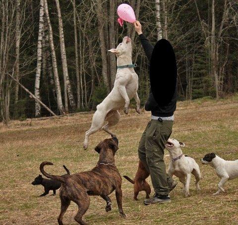 Hundene var livet for 30-åringen. -Jeg har hatt et nært og personlig forhold til alle hundene mine, sier 30-åringen.