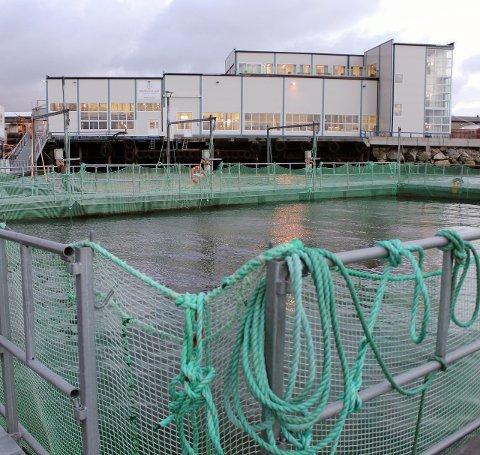 Mer: Marine Harvest vil øke biomassen ved Hestøya.