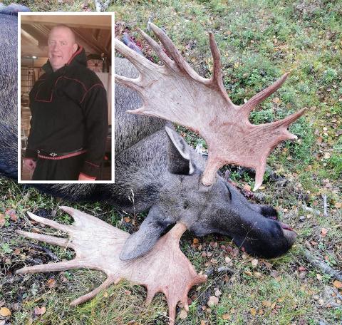 GIGANTOKSE: Dyret som angivelig skal ha vært skadeskutt tidligere, og som jaktlaget senere felte. Jegerne anslår at slaktevekten var på rundt 300 kilo, noe som er enormt for en elg. Tor-Ørjan Store er avbildet til venstre.