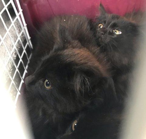 Noen av kattene som den lokale dyrebeskyttelsen har lykkes med å fange i høst.