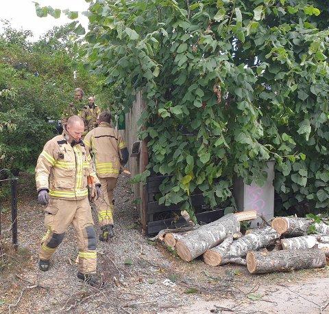 Brannvesenet var raskt på plass for å fjerne bjørketreet onsdag morgen.