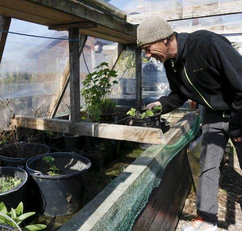 Drivhus: Et selvkomponert drivhus delvis dekket av plast og delvis åpent. Her kommer både urter, grønnsaker og planter opp.