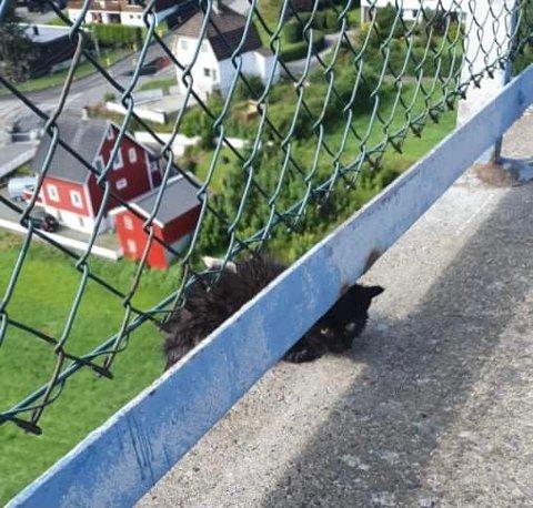VAR ILLSINT: Søstrene Nordbø Sundgot fant den lille kattungen helt på kanten torsdag formiddag.