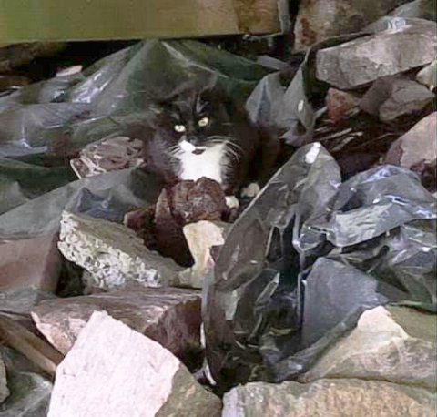 SKADET: Denne katten savner eieren sin. Den skal være skadet i beina og holder til i på Røssern i Kristiansund.