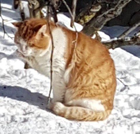 Denne katten holder til på Østre Jevnaker.