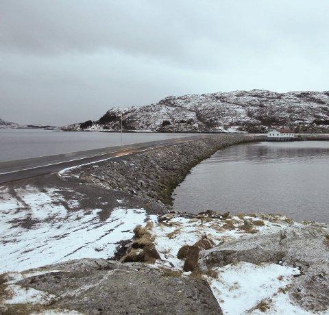 UENIGHET: Moloen på Bjørn i Dønna skaper konflikt. Foto: Jarl G. Sandholm