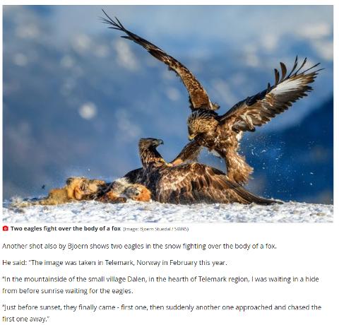 PÅ TOPPLISTEN: Dette bildet tatt i Dalen er ansett som et av de beste naturactionbildene, ifølge Society of International Nature and Wildlife Photographers.