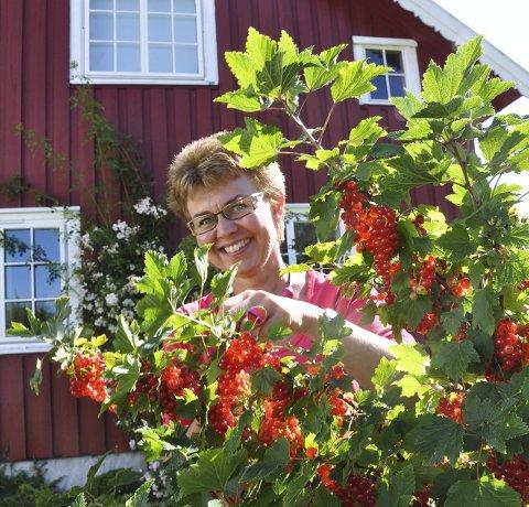 HURTIGPLUKKING: Med bærplukker går ripsplukking fort.