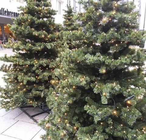 Tenk miljø også når du velger juletre.