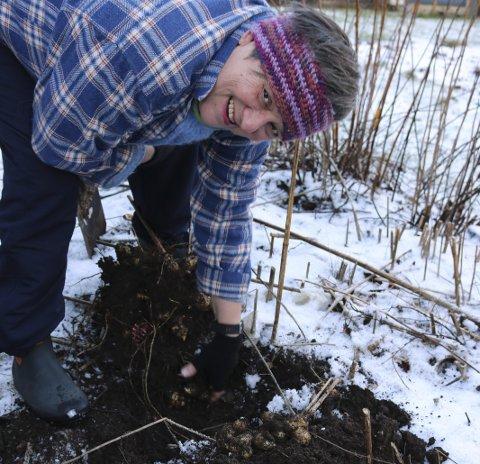 1 Jordskokk: Jordskokken ligger i jorden gjennom vinteren, når kulden slipper taket passer Turid Solgård på å få opp litt flere.  2 Middag eller chips?: Det blir jordskokk til middag hos både Regine Salehpour og Grethe Vangsnes denne dagen, eller kanskje blir det jordskokkchips.  3 GRØNNKÅL: Grønnkål er en populær og næringsrik grønnsak, og den kan høstes direkte fra åkeren gjennom vinteren. 4 TEXASBYEN: Kjøkkenhagen ligger sør for rekkene med boligene som utgjør Texasbyen. Her kan barna boltre seg med dyrking av sine favorittgrønnsaker. 5 BARNAS KJØKKENHAGE: I barnas kjøkkenhage er det ikke bare plantekasser i spreke farger og gamle bildekk, men også en seng blir brukt som plantekasse. I bakgrunnen står et gammelt prydepletre, eplene kan blant annet brukes til å lage gele. 6 KOMPOST: Turid Solgård er spesielt opptatt av varmkompostering, her gjør hun klart for å kaste dagens matavfall. Foto: Ingeborg Kringeland Hald