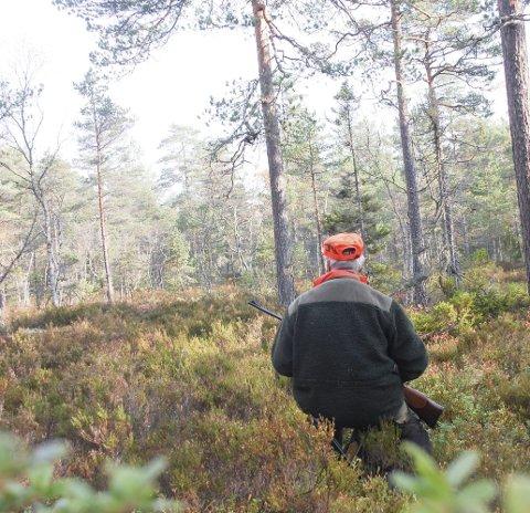 STILLE PÅ POST: Elgjakta er ikke som før i Aurskog-Høland. Jevnt over er det langt mellom hver gang det dukker opp elg, og timene på post kan bli mange og rolige.Illustrasjonsfoto