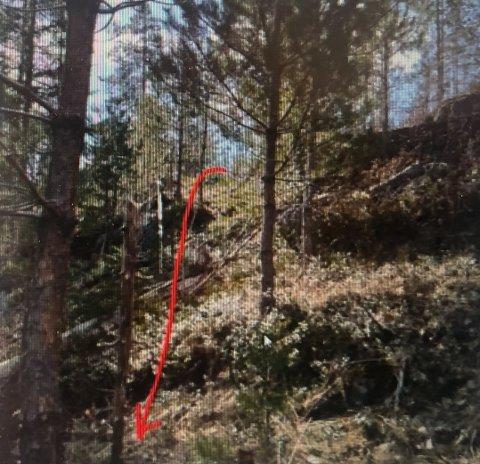 Bilde av skogsområde som vil bli berørt dersom veiplanene realiseres.