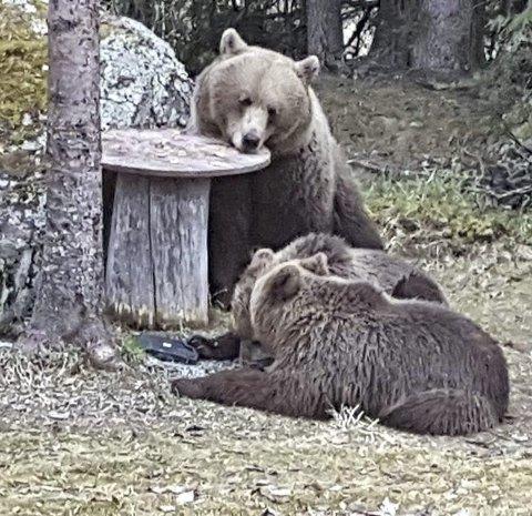 HVIL: De to yngste tok seg en liten hvil, mens de ventet på at mor tok «oppvasken».