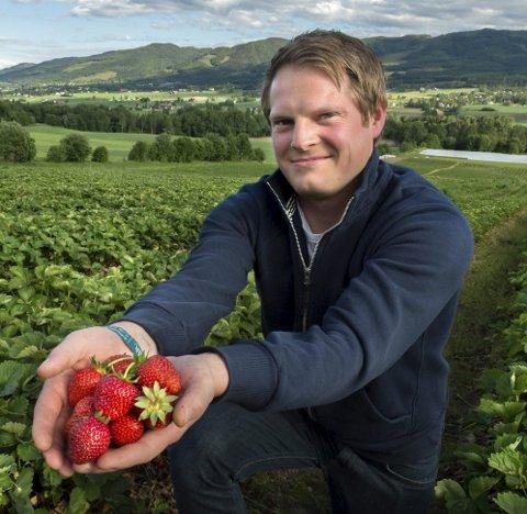Tidlig på'n: Den ellers så kravstore Totenbæra har allerede begynt å trives på åkrene til jordbærbonde Per Andre Dyste på Skreia. foto: asbjørn risbakken