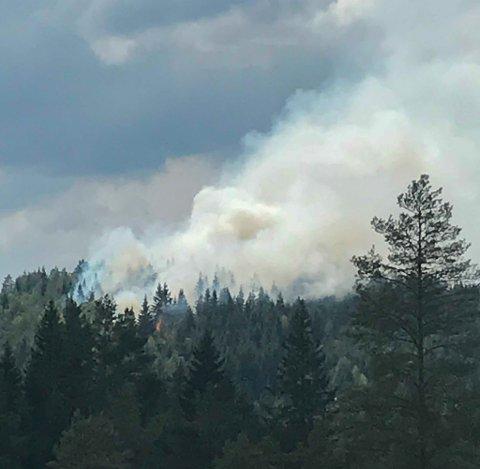 Skogbrannen på Vegårshei startet etter en omgang med lyn og torden.