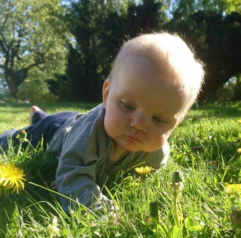 BLOMSTEN: Ellen Abrahamsen har tatt et fint bilde avbarnet i enga.
