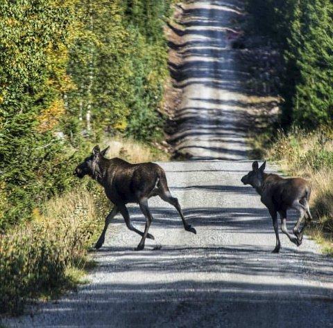 KONGEN: Anne Elise Furustad har «skutt» skogens konge.