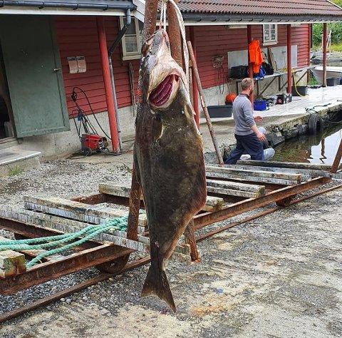 REKORD: Steven Dressel (33) fikk kveite på 47 kg utenfor Solvåg Fjordferie.