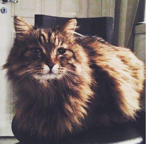 Mange studenter vil nok savne den flotte katten.