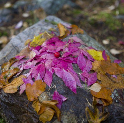 Blader: Kunstverk laget av høstfargede blader. Dette er kulturskolens kunstverk ved Lysdammen.