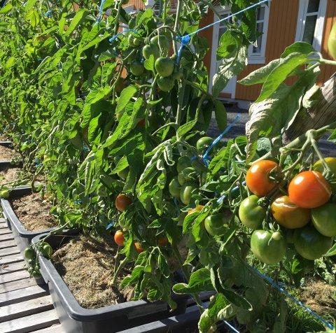 LØRDAG: Lørdag kommer grønnsakene på Ærlighetens marked.