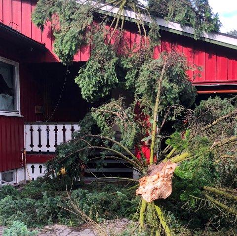 Et tre falt fredag kveld over hustaket til Karen og Steinar Stensberg.
