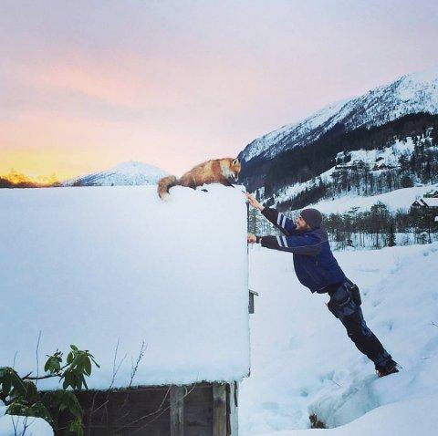 NÆRKONTAKT: Her lokkar Larsen til seg reven med litt lettsalta torsk. Bildet er henta frå hans Instagram-profil.