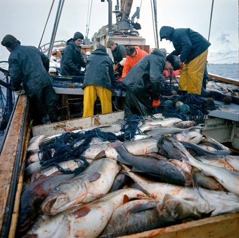 TORSK: Den norske torsken sendes til Kina for å fylles med vann og kjemikalier, før den returnes til Europa.