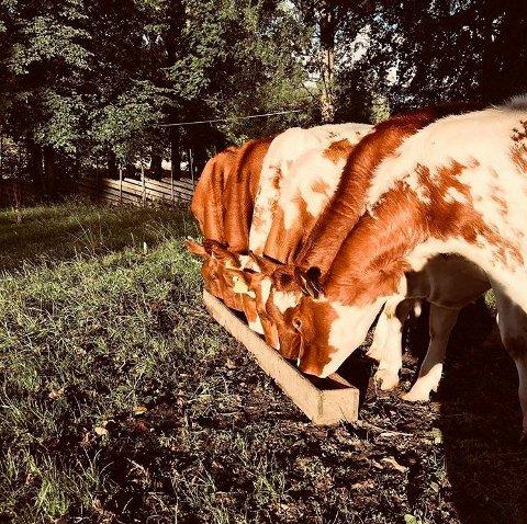 Landbruksbilder: Bilder som dette tatt av Anne Mæhlum og sendt til RB i fjor sommer er eksempel på bilder Innlandsmarkedet og lokalavisa ønsker seg denne sommeren. Det er bare å begynne å sende inn.