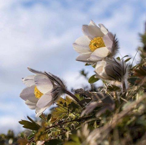 4. MOGOP: Vårtegn på Vinstra. Foto: Jon Stensrud