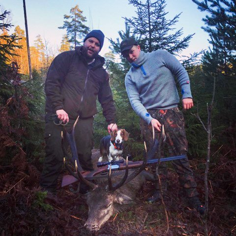Martin Grimsland (t. h.) og Mathias Ellefsen med kronhjorten som falt i skogen på Dypvåg et par uker før jul. Privat foto