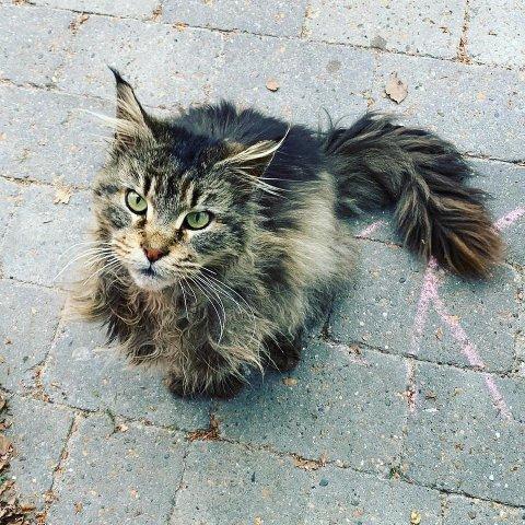 Slik så Pippi ut da hun ble funnet før helgen. Foto: Jacqueline Thiesen