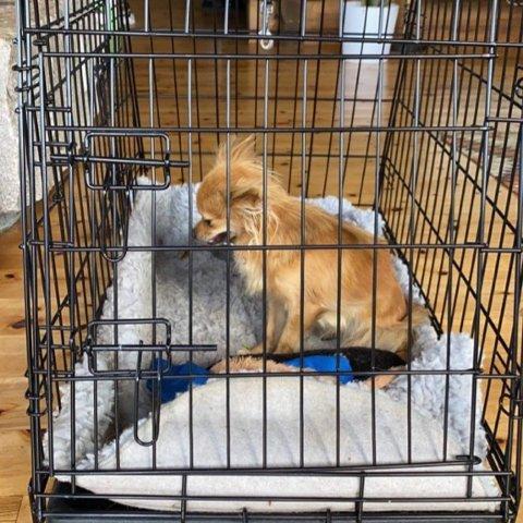 TRYGG! Dette bildet er tatt kort tid etter Rosie ble funnet. Nå kan hun hvile i trygge omgivelser.