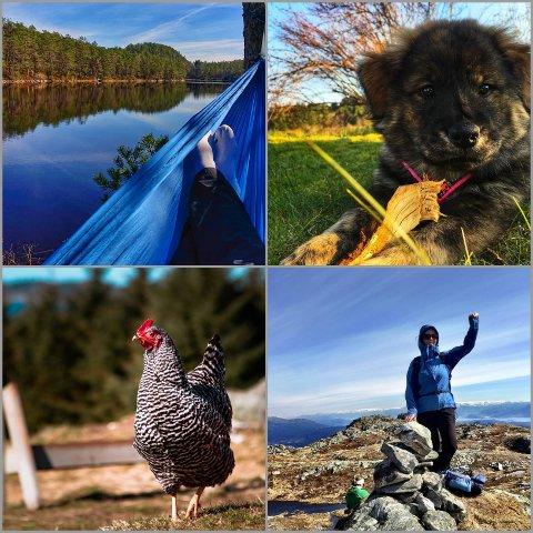 Desse bilda er alle lagt ut på Instagram og er merka med #avisanh, for å vise fram vår vakre region og alt som finst her!