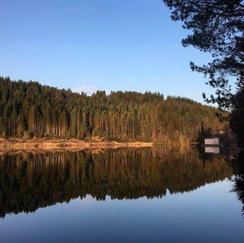HOGSTMODEN PÅ OVERTID: Den store sitkagranskogen på nordsida av Storeåsen, sett frå Lillevatnet.