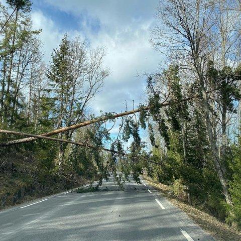 VELTEDE TRÆR: Den sterke vinden har ført til at trær har falt over veien en rekke steder i distriktet. Noen steder har trærne felt ned strømlinjene, og ført til strømbrudd.