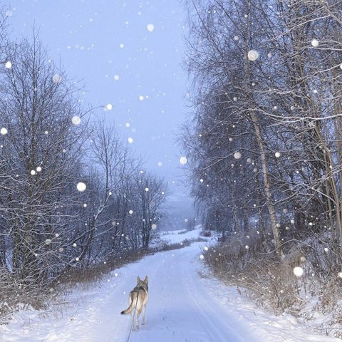 2. Hund på løpetur i snøværet. Foto: Eva Heidal