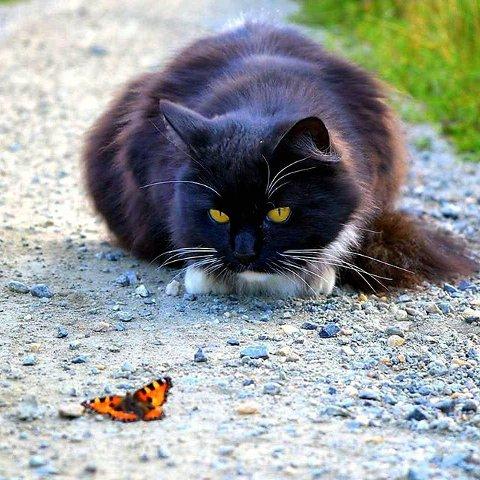 2. Katt og sommerfugl. Foto: Wenche Kroken