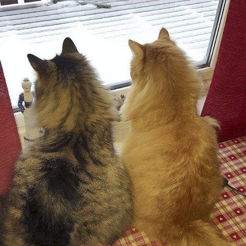 VENNER FOR ALLTID: Godt å være inne og se på være med en kompis når det er kaldt ute. Foto: Gerd Kari Moen