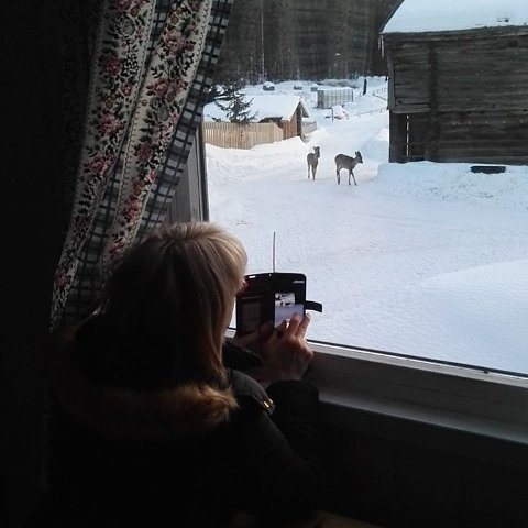 FILMER: Ektemannen tok bilde av Gerd Kari Moen mens hun filmer rådyr på gardsplassen.
