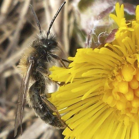 7. VÅRSTEMNING:  Blomster og bier er et sikkert vårtegn. Foto: Manka Granum